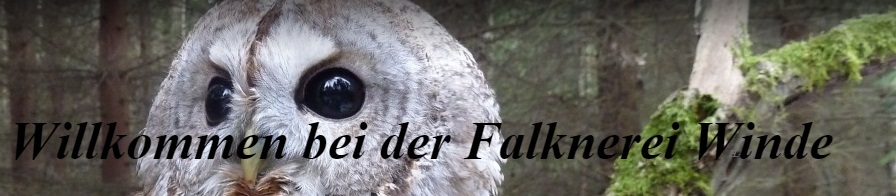 Falknerei Winde